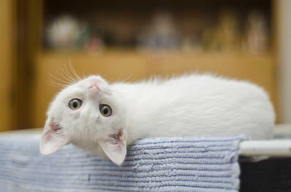chat seul maison