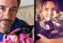 chats mignons célébrités