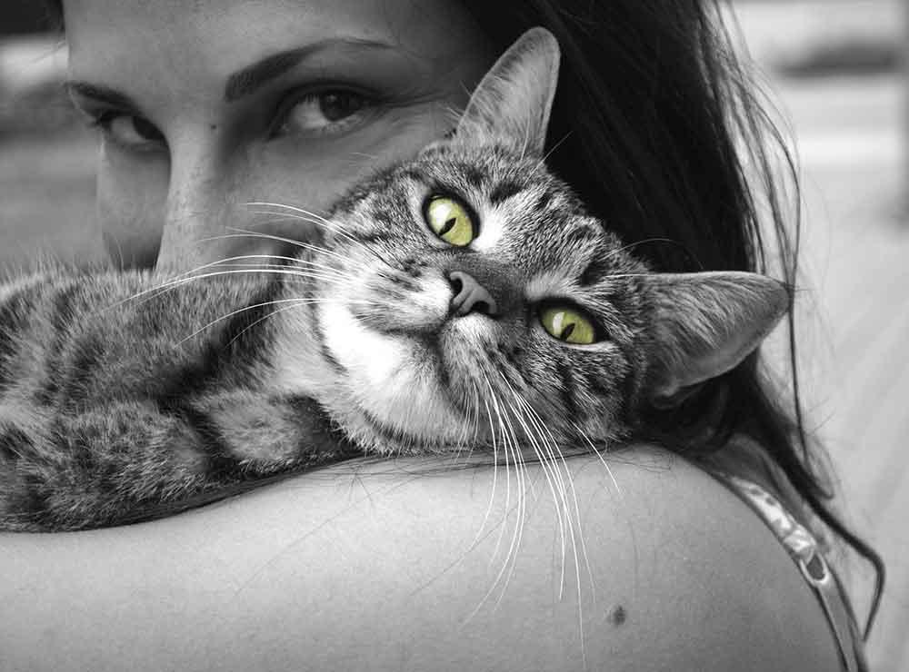 chat stérilisé continue marquer