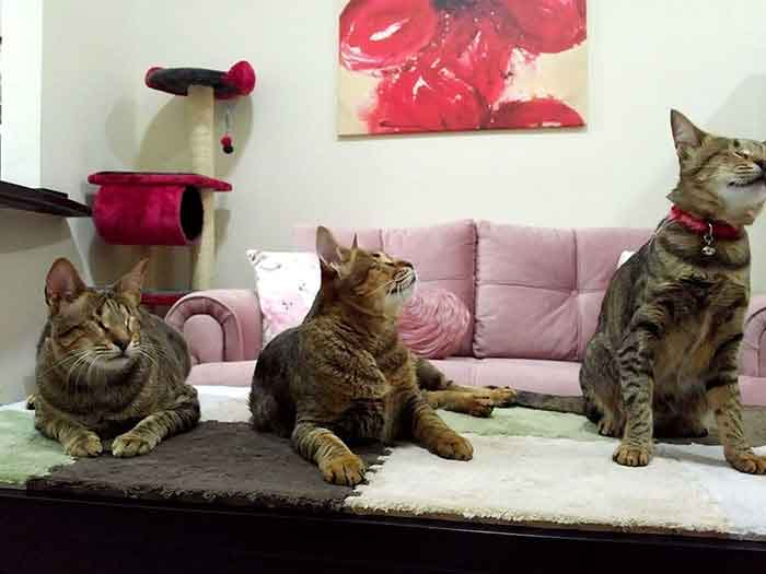 femme adopte chats aveugles