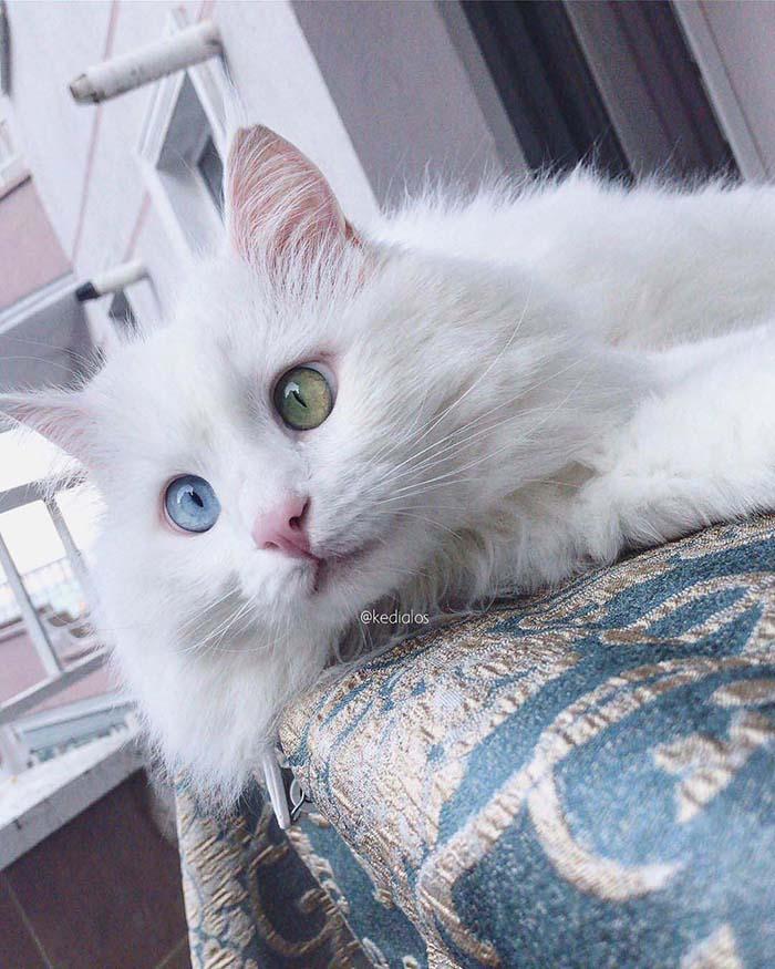 superbes chats plus beaux yeux