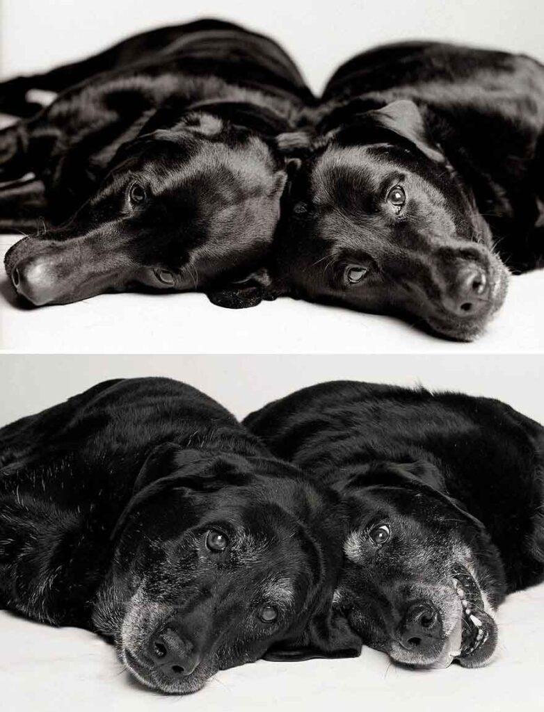 Amanda Jones chiens