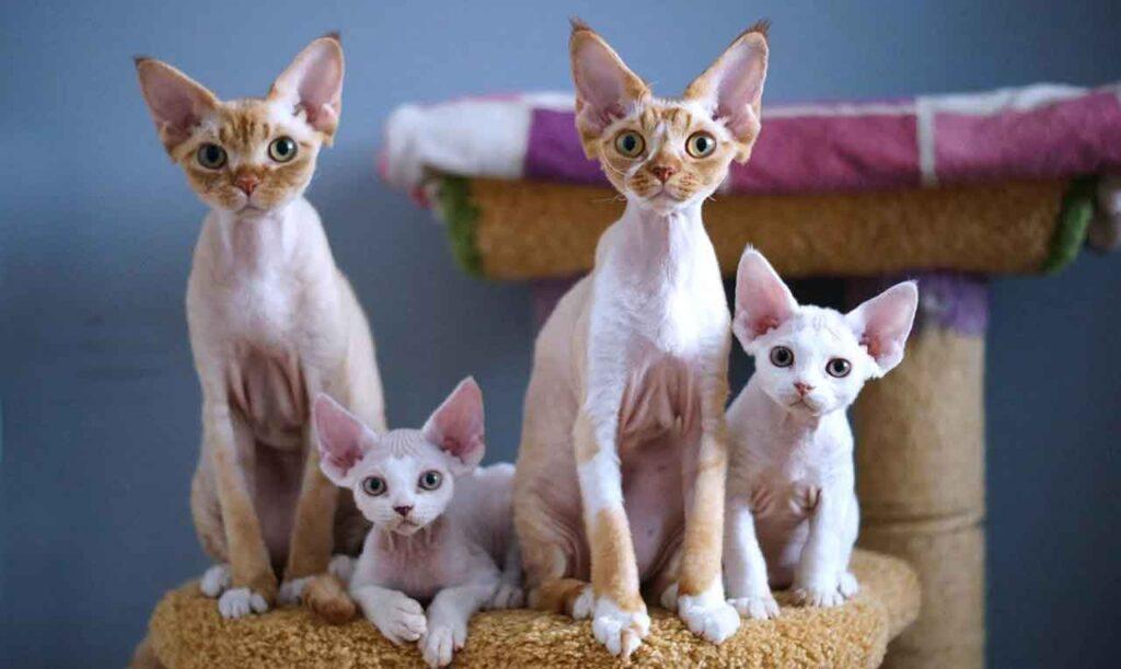 chats qui ne perdent pas de poils