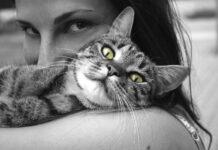 Les chats se lient solidement à leurs humains plus que les chiens