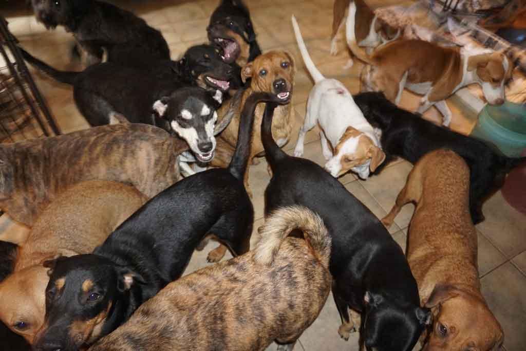 Chella Phillips sauve chiens Dorian