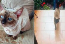 Ching chat s échappe rend visite voisin