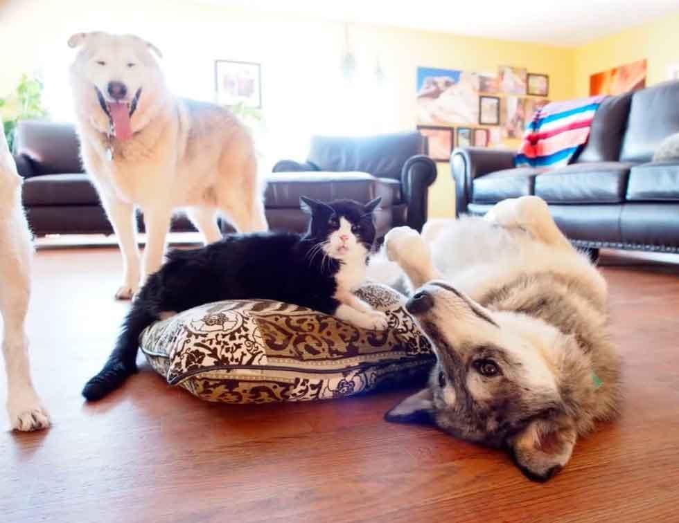 Dexter chat 20 ans trouve maison