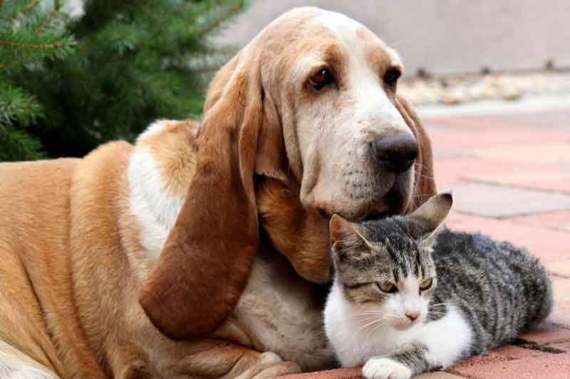 races chiens entendent chats