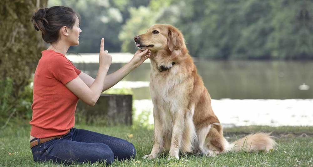 mythes sur les chiens