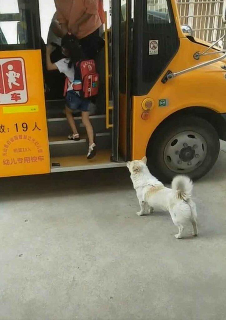 Chien fidèle bus scolaire jeune propriétaire