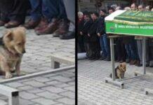 chien cœur brisé visite tombe ami