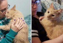 Huggs vieux chat sauvé abri remercie famille