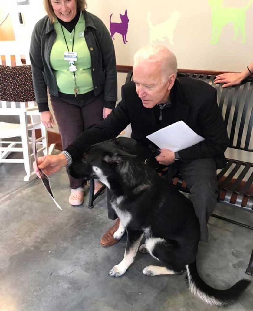 Major chien Joe Biden