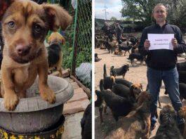 Pesic homme refuge 750 chiens