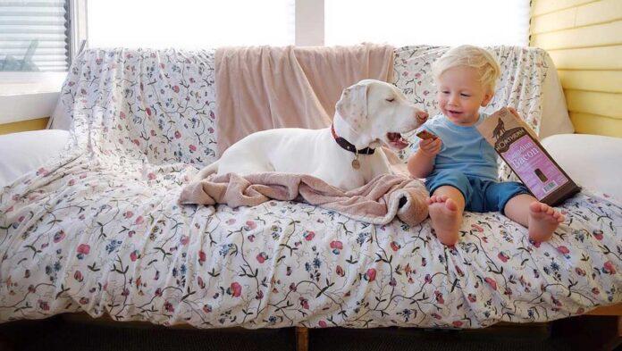 Nora chienne maltraitée surmonte peurs grâce bébé