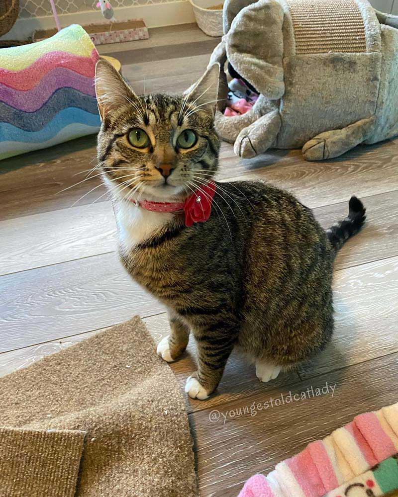 chat sans-abri entre maison chatons