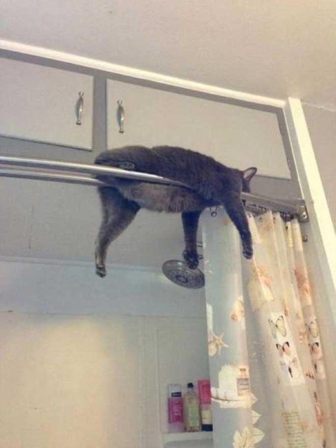 Qu'est-ce qui ne va pas avec mon chat