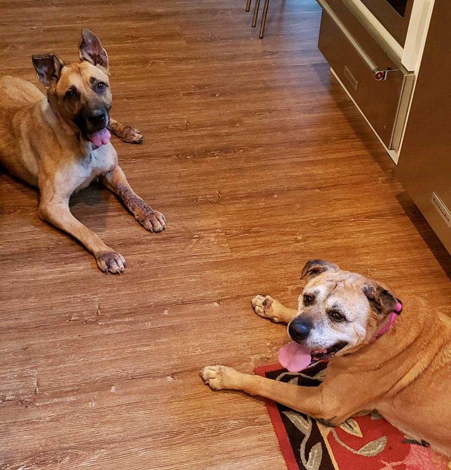 femme Leslie refuge ramène 2 vieux chiens