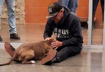 Pat Blue chien père trouvé après 6 mois