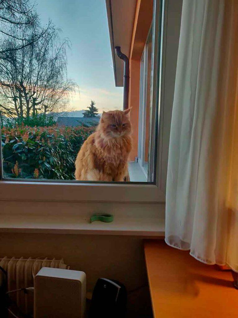 anatole chat court dire bonjour