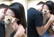 Alex chien retrouve famille après 6 ans