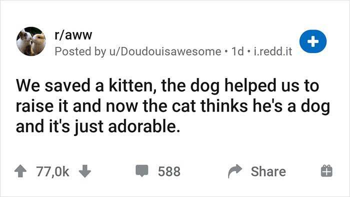 chiens aident élever chaton sauvetage pense il est chien