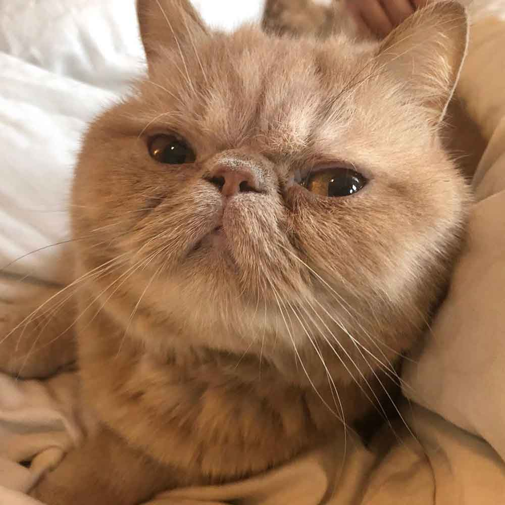 George chat