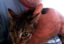 homme perdu oeil adopté chat borgne