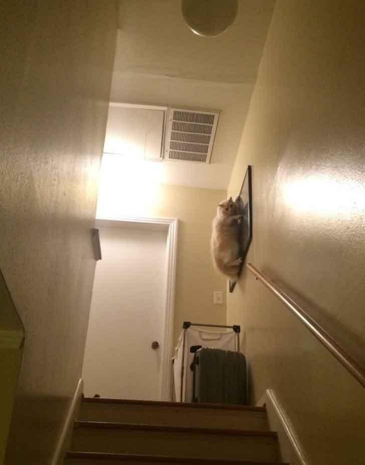 photos chats créatures étranges