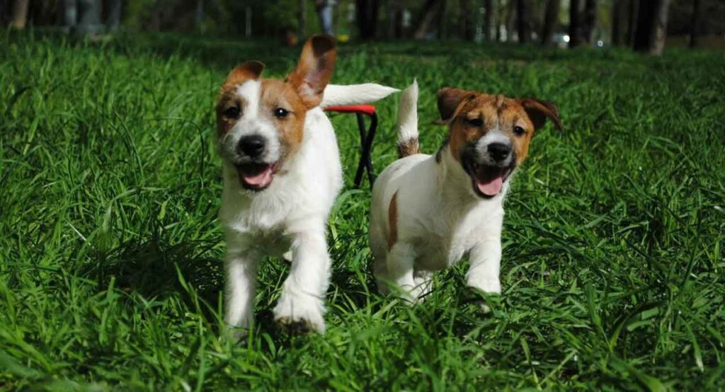 Conseils utiles dressage chiens