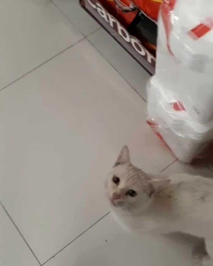 Conejo chat errant guide femme supermarché