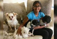 Meena Kumar fille adoptée aide chiens âgés
