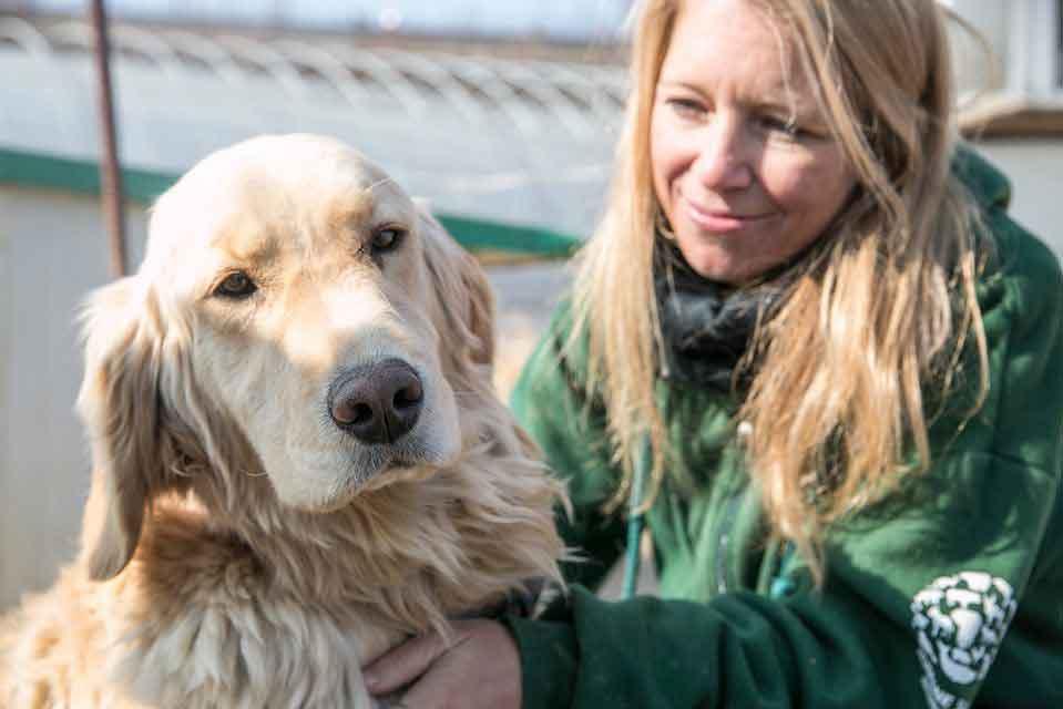 70 chiens sauvés corée du sud