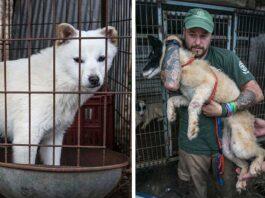 Chine interdit manger viande chien