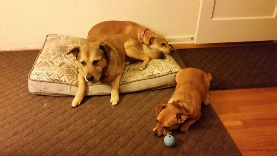 travailleur refuge enrage abandon chien Canela