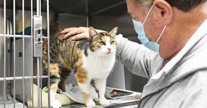 chat réunit famille disparaît 3 ans
