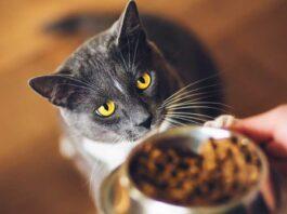 meilleurs aliments pour chats