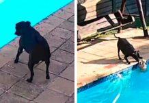 caméra sécurité attrape chien sauve piscine