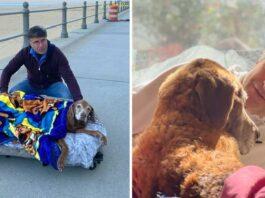homme construit lit mobile chien 16 ans