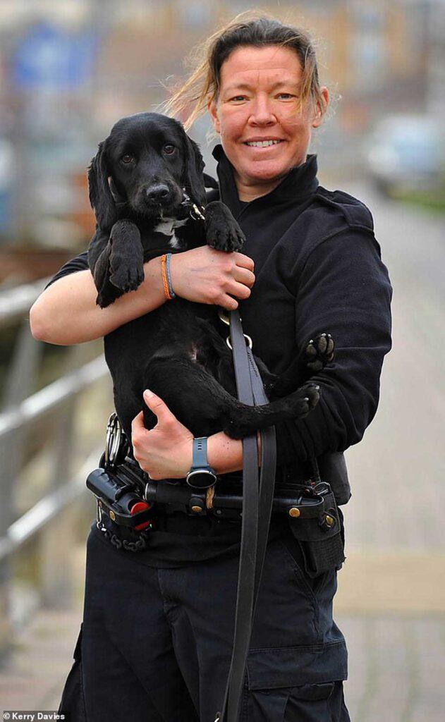 Badger Chien policier Cocker anglais