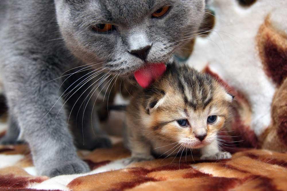 Comment prendre soin petit chaton