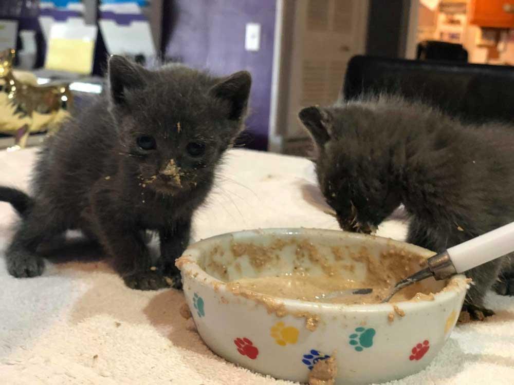 Nourrir petit chaton