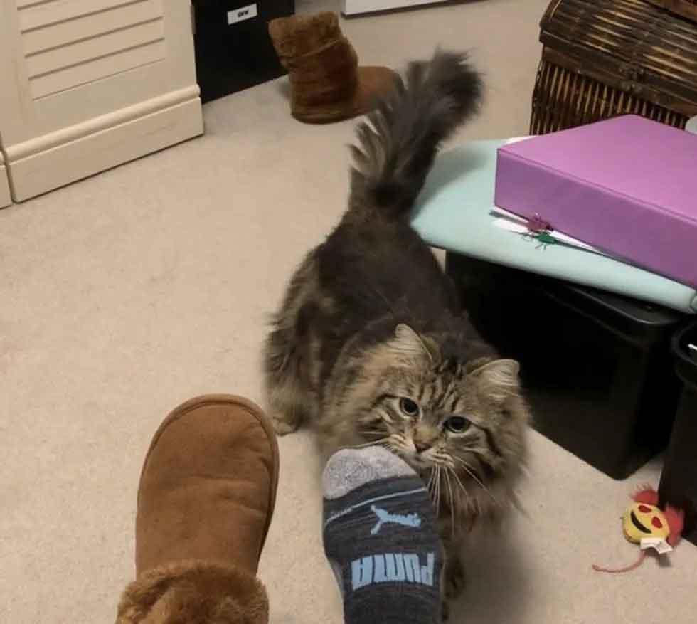 chat heureuse adoptée apporte pantoufles matin