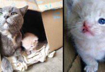 chatons errants un oeil Kris Kia