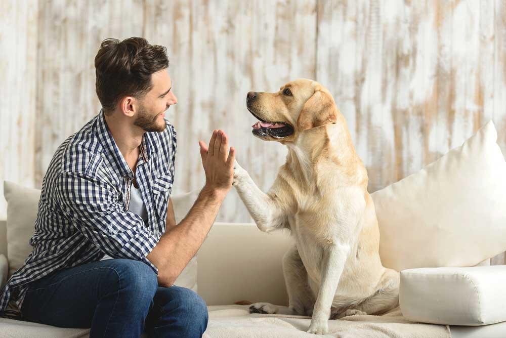 Faits Psychologie canine