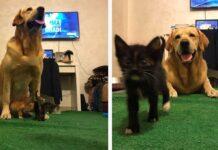 Labrador sauv chatons abandonnés mort