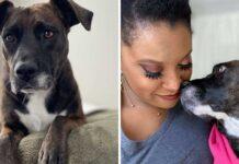 Lauren Ginnie photo chien yeux tristes aide