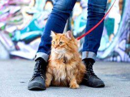 avantages marcher chat domestique