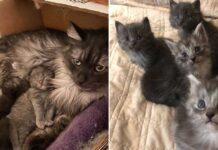cailey conduit des heures aide chat harmonie