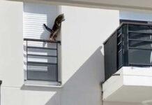 chat enfermé rebord fenêtre